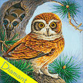 Owl and Owlets - Diamond Painting pakket - Wizardi Pakket met vierkante diamantjes