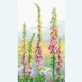 Foxgloves at Dawn - handwerkpakket met telpatroon Vervaco