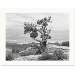 Lonesome Tree | Arches National Park, Utah, USA, 2018 | Edition Print 24   unlimitiert | Bildnummer: IQ180_181104_057bw-24