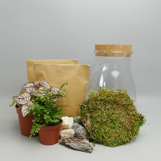 Terrarium DIY Set - The Botanical Room